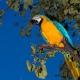 Parrot Maldives