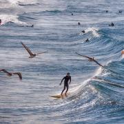 California Surfers